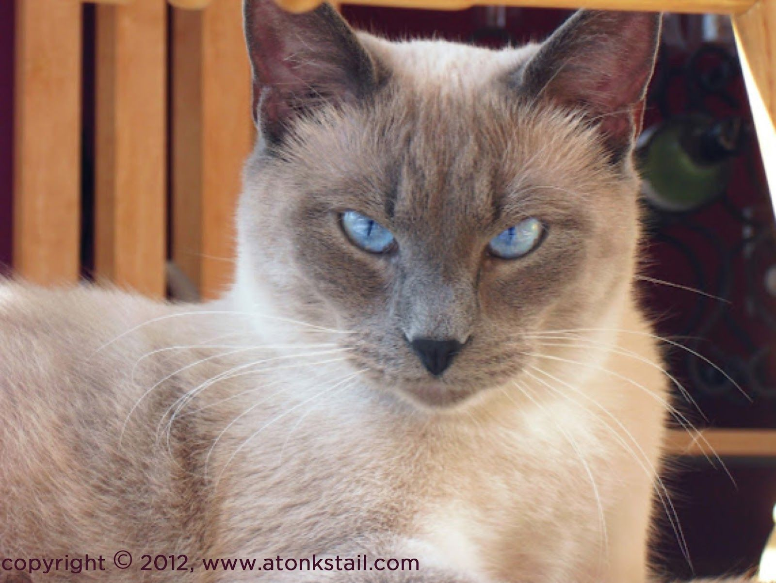 A Tonk S Tail Err Tale Cat People Cat Photo Cats