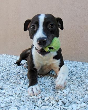 Meet MJ, a Petfinder adoptable Hound Dog | Largo, FL | Petfinder.com is the world's largest database of adoptable pets and pet care information....