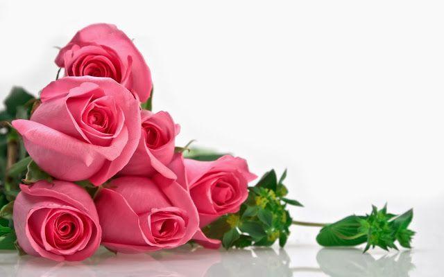 Gift Of Strength Peace To Bless Rose Flower Wallpaper Pink Rose Bouquet Flower Wallpaper