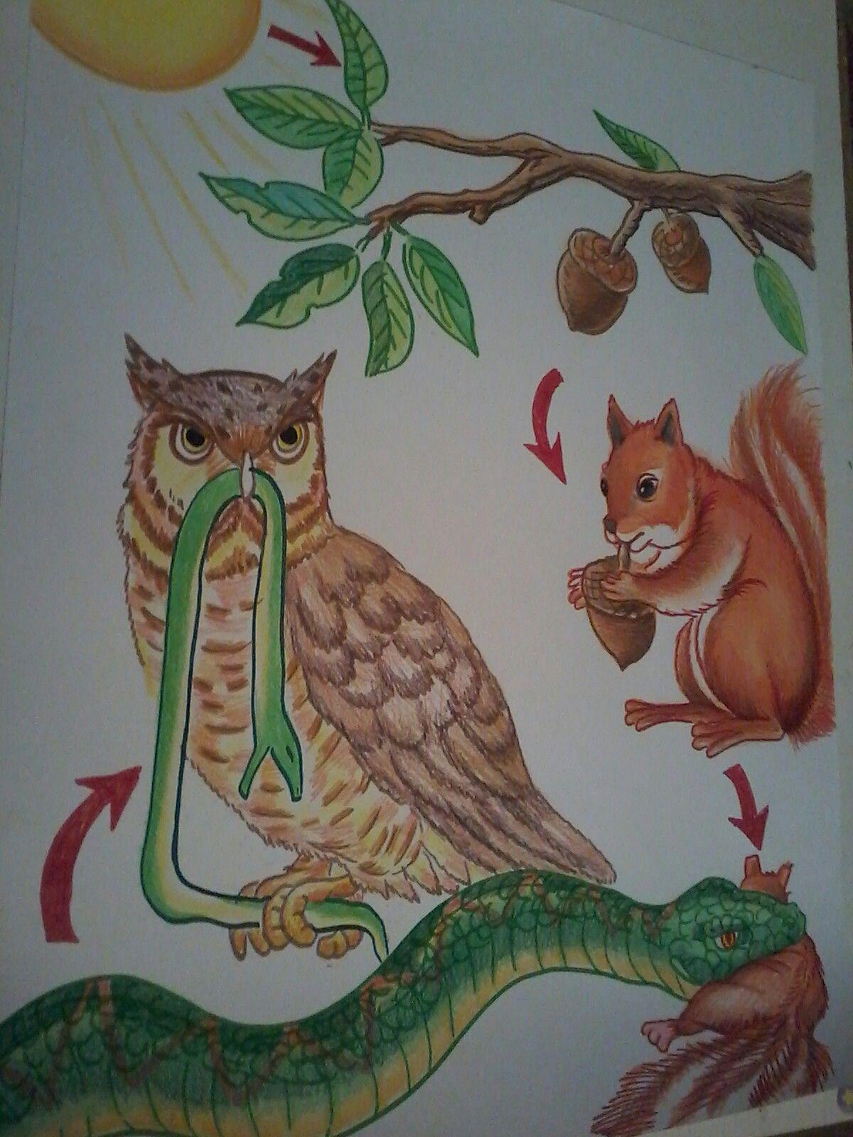 Dibujo Cartulina Cadena Alimenticia Maquetas Escolares Animales De La Granja Actividades Escolares