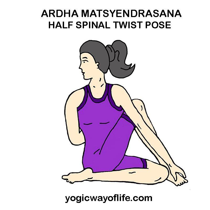 Ardha Matsyendrasana The Half Spinal Twist Pose Asana Yoga Help Yoga Lessons