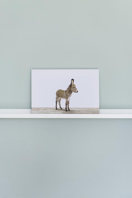 Baby ezeltje voor aan de muur. Wanddecoratie voor de kinderkamer ...