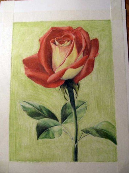 Rose Mit Copics Malen Melanies Blog