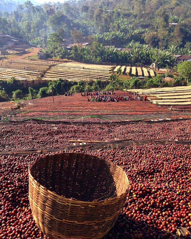 Abury Meets Ethiopian Coffee Experts Sali And Sara Nuru Ethiopian Coffee Ethiopia Nuru