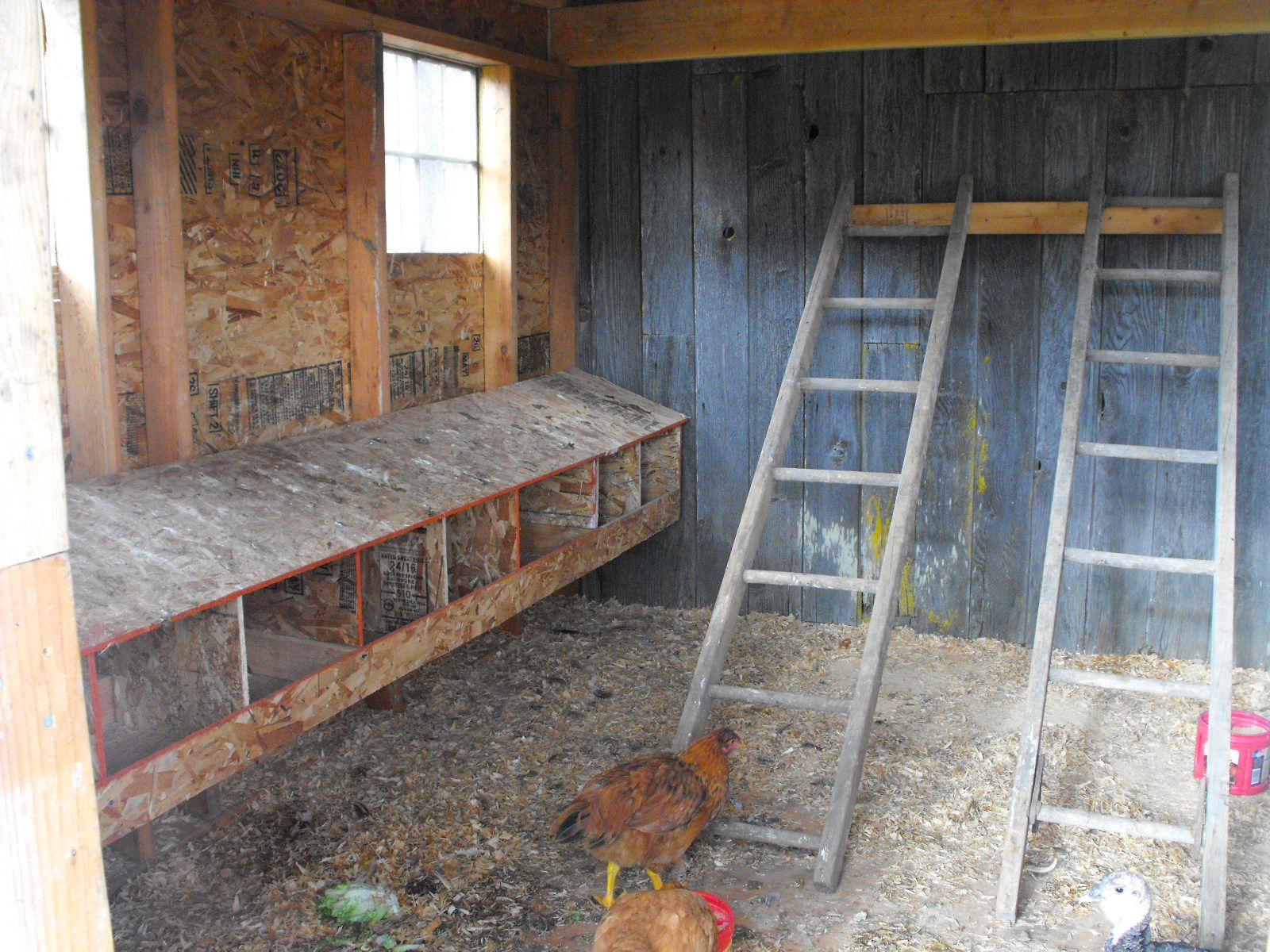 Chicken coops made out of swing sets and we have a for A frame chicken