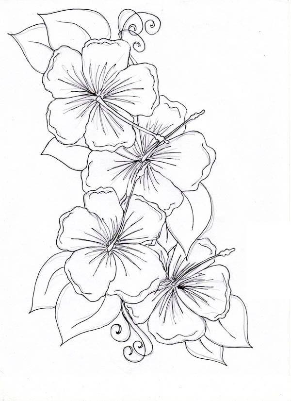 Hibiscus Flower Drawing Coloring Page Hawaiian Flower Tattoos Hibiscus Flower Tattoos Flower Drawing