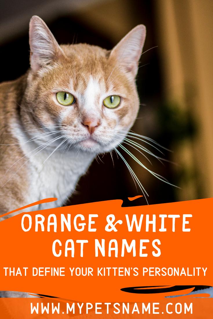 Orange And White Cat Names Orange And White Cat Cat Names Tabby Cat Names