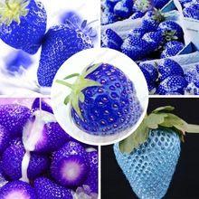 28cda133e Varanda frutas sementes azul morango sementes de morango delicioso fragaria  ananassa sementes - 200 pcs(China (Mainland))