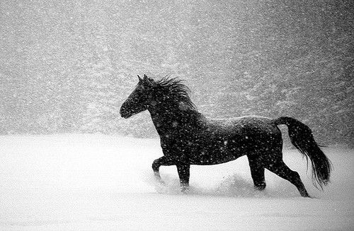 black horse in snow by de.laville on Flickr.