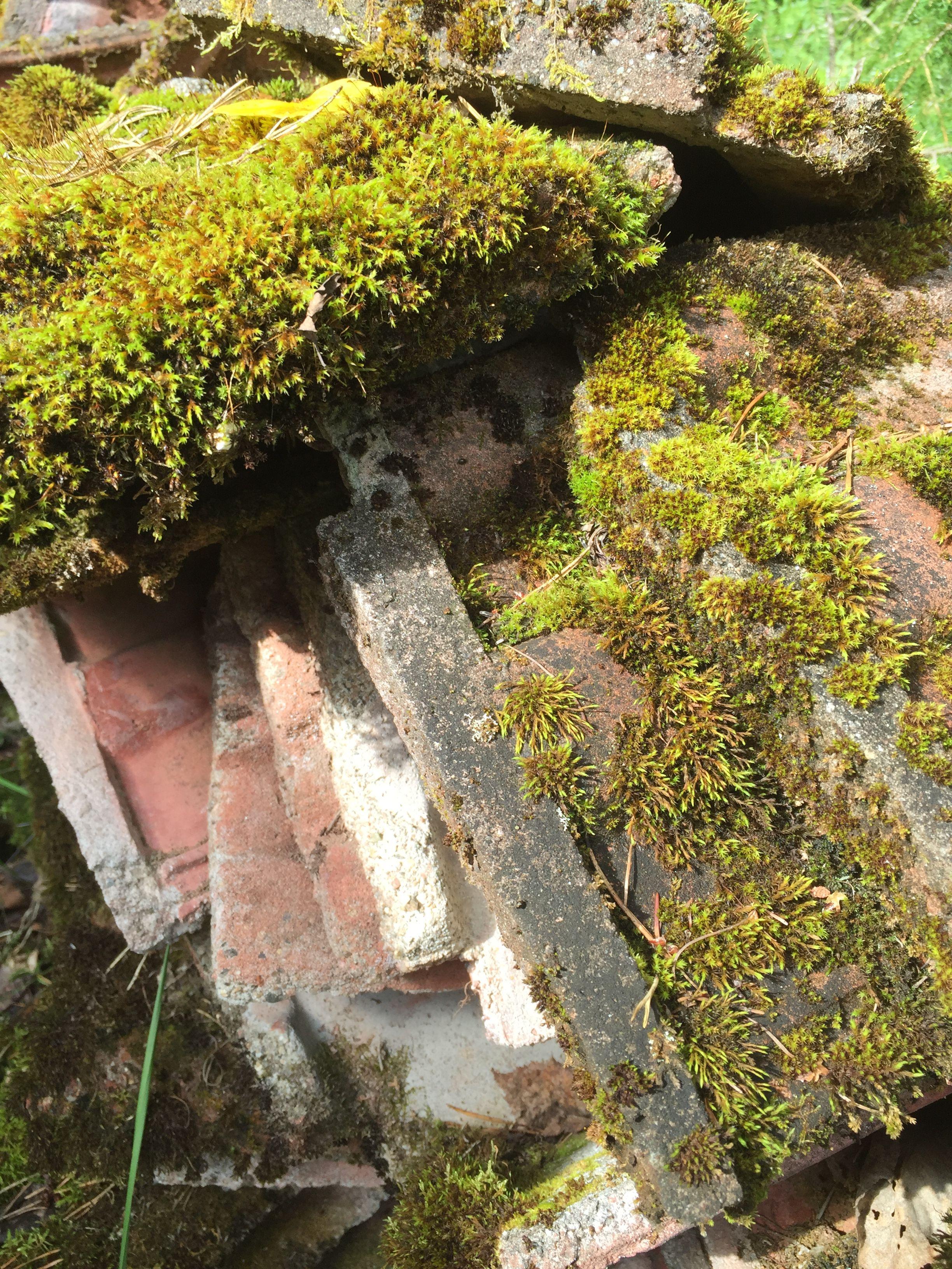 Sammaloituneetkin vanhat kattotiilet