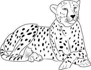 Ausmalbild Gepard Im Zoo Ausmalbilder Tiere Ausmalen Gepard