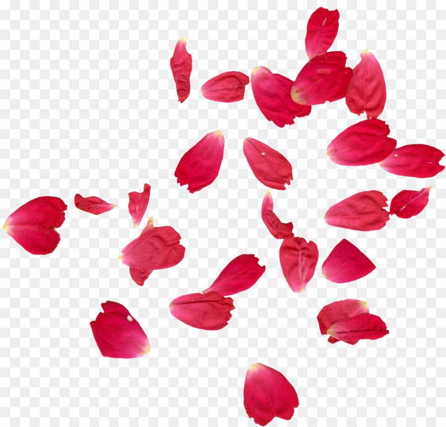 faridabad petal rose flower