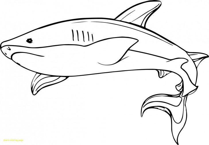 Shark Coloring Pages Pdf Buku Mewarnai Warna Buku