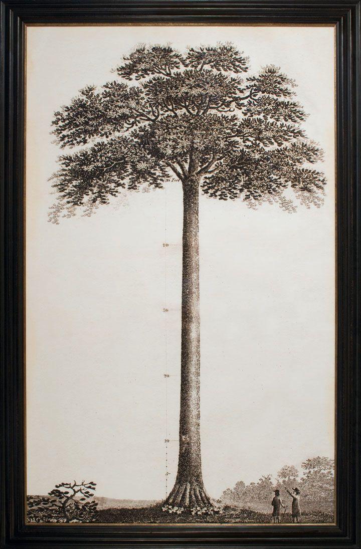 Wall Decor Framed Art Prints Natural Curiosities Tree Artwork Tree Wall Art