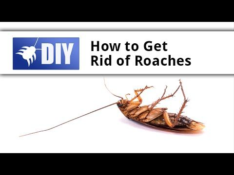 what to use to kill german roaches
