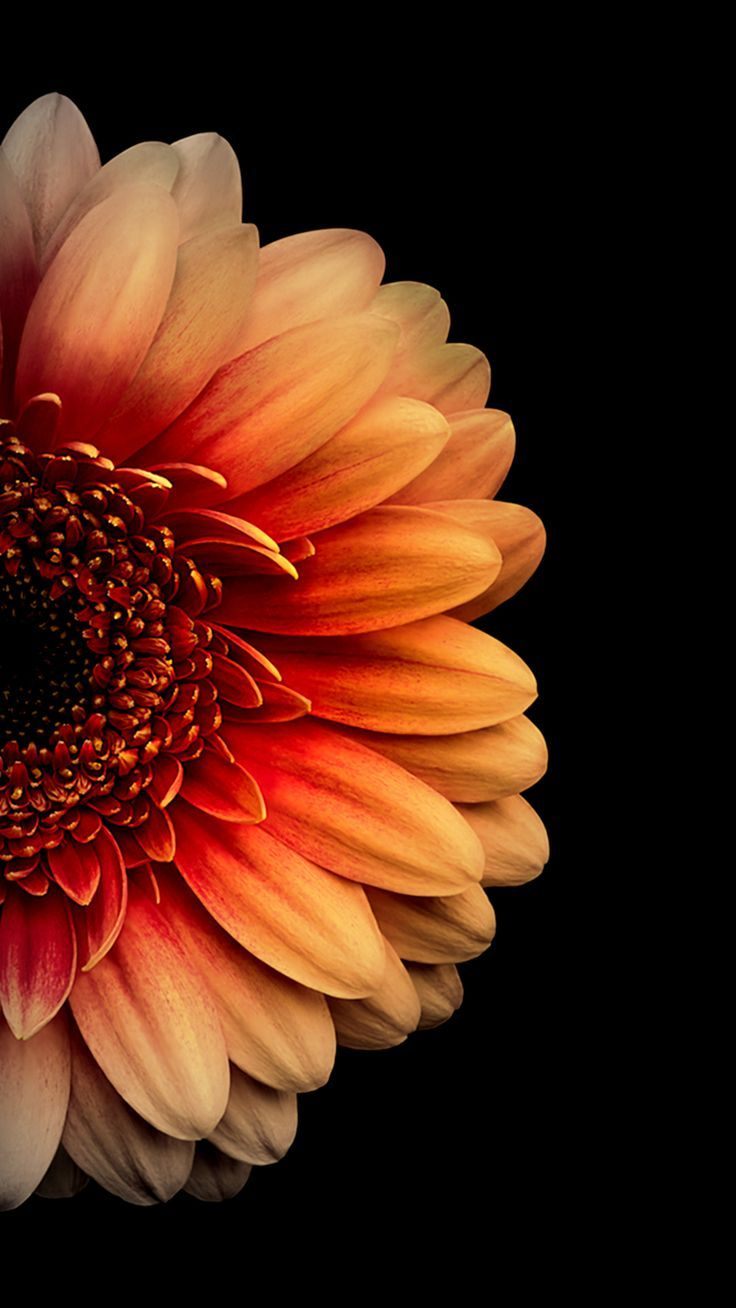 Www Vactualpapers Androidwallpaper Androidwallpaperhd1080p Androidwallpaperhdblack Andr Flower Iphone Wallpaper Orange Wallpaper Flower Phone Wallpaper