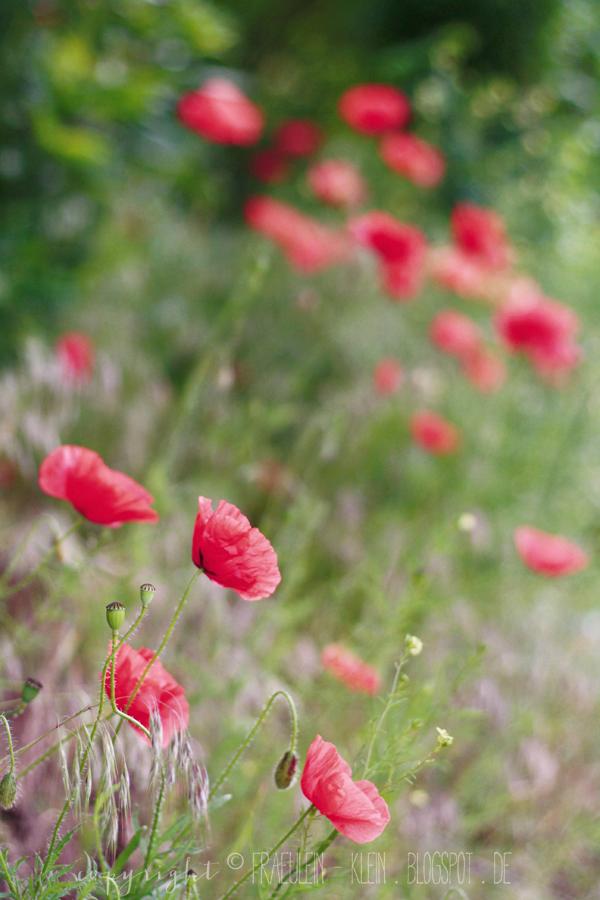 Mohnblumen Mohnrolle Mit Thymian Beeren Ein Neues Buch Mohnblume Mohn Blumen