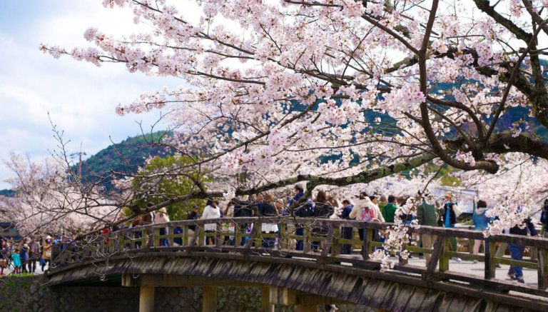 When Is The Best Time To Visit Japan Boutique Japan Visit Japan Japan Holidays Japan