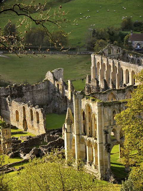 Yorkshire Terrace: Rievaulx Abbey From The Terrace