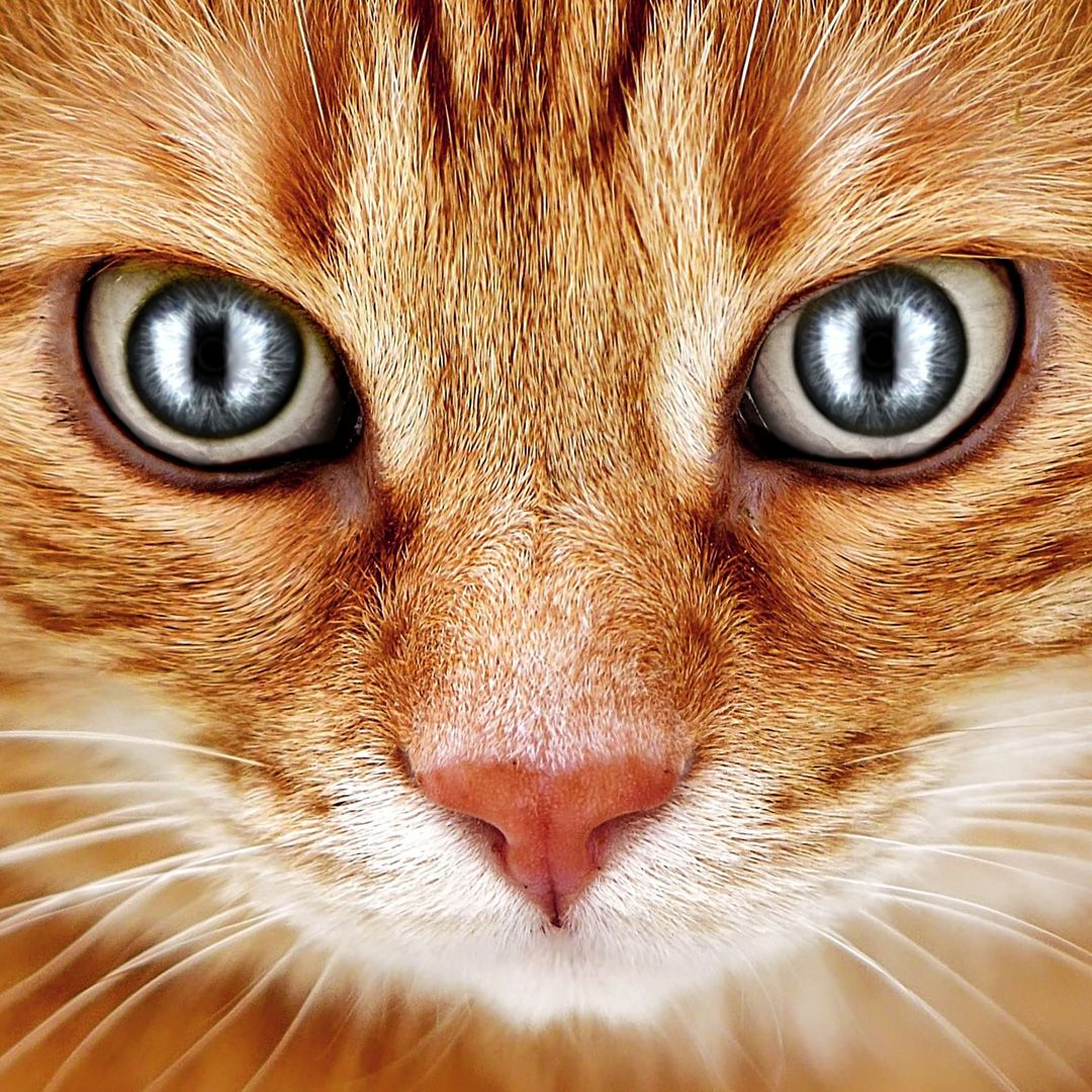 13 Interesting Cat Facts You Need To Know Funny Animals Animals Cats
