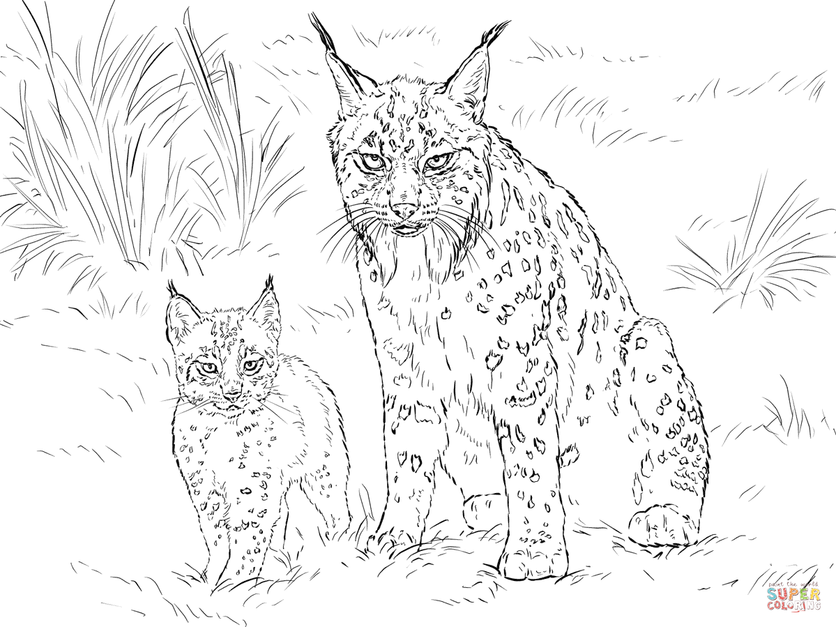 bobcat coloring pages google search furry fishy