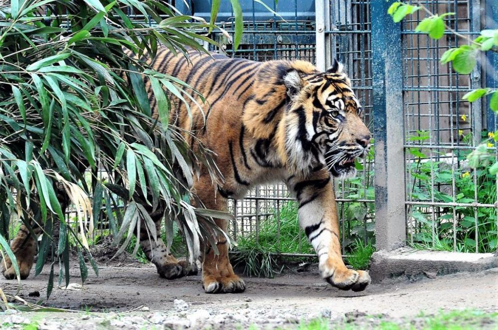 Zoo Krefeld Mit Tragischer Geschichte Verpottet In 2020 Zoo Krefeld Zoo Raubtiere