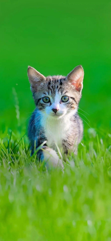 Pin By Mia On Batman S Zoo In 2020 Kittens Cutest Pretty Cats Cute Animals