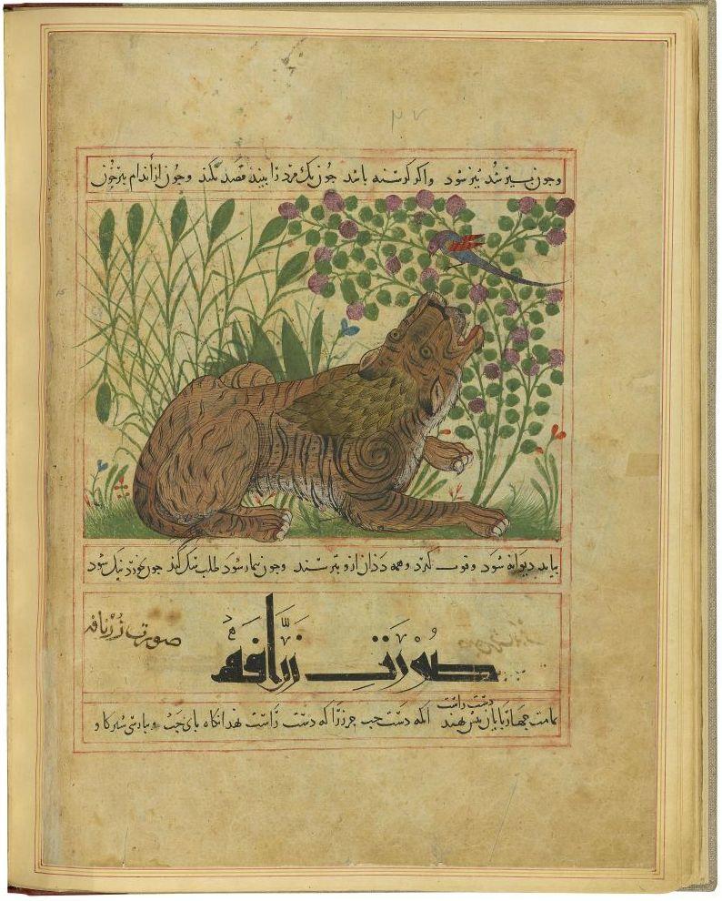 Tiger, Ibn Bakhtīshū˓ (d. 1058), Manāfi˓-i ḥayavān (The Benefits of Animals), in Persian. Persia, Maragha, between 1297 and 1300, for Shams al-Dīn Ibn Ẓiyā˒ al-Dīn al-Zūshkī, Morgan Library and Museum