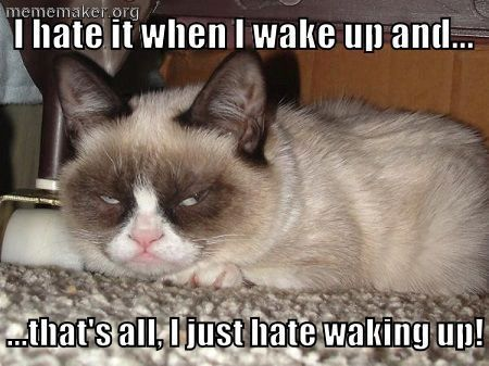 Grmpy Cat Funny Grumpy Cat Grumpy Cat Quotes For The Funniest Quotes And Humor Pics Visit Www Bestfunnyjoke Grumpy Cat Humor Grumpy Cat Grumpy Cat Quotes