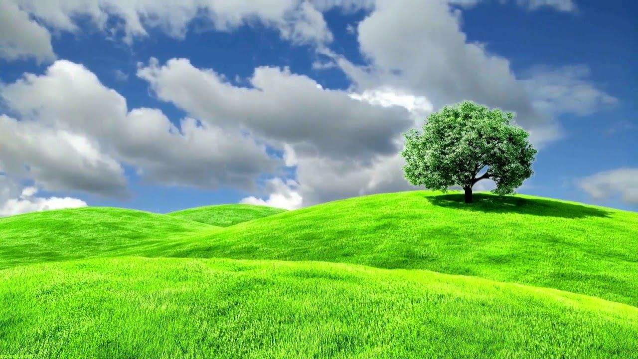 Nature Beautiful Grassland Landscape Background Video 822 Landscape Background Green Screen Video Backgrounds Background Images Hd