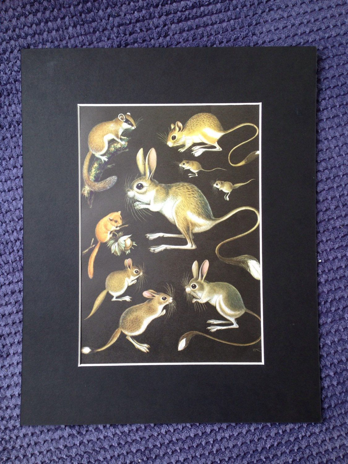 1968 Vintage Small Rodent Print - matted and ready to frame - 14 x ...
