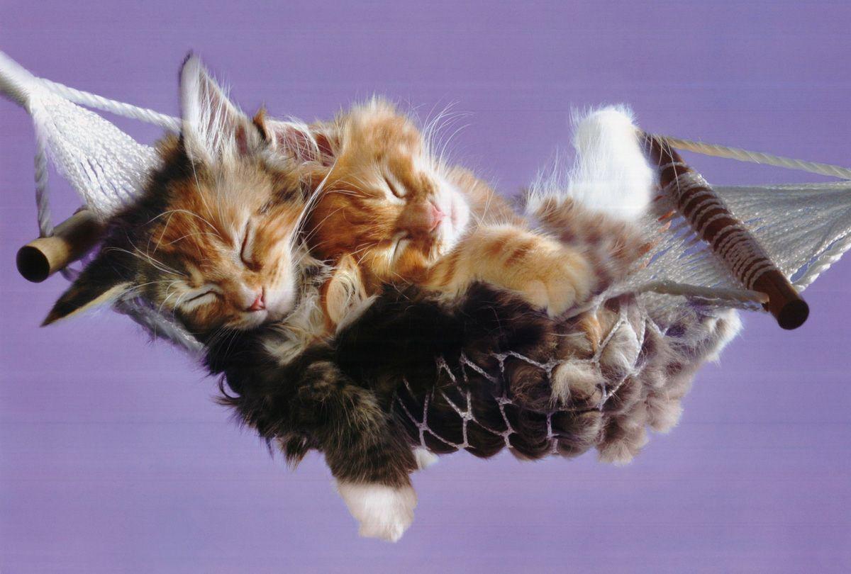 Kittens Hammock Animal Cute Kittens Cutest Sleeping Kitten Kittens Funny