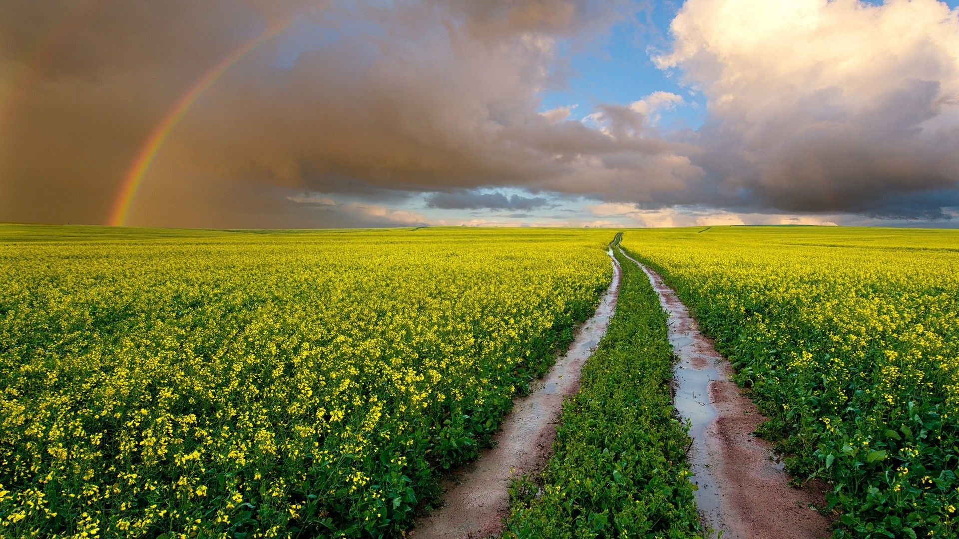 Wallpapers Clouds Landscapes Nature Flowers Wet Fields Rainbows South Africa Sky Natural Scenery Natural Scenery Canola Field Beautiful Nature