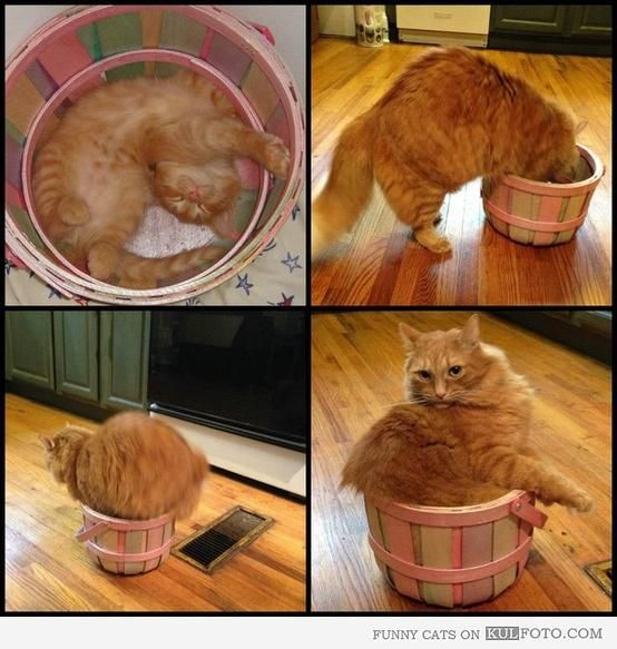 Then and now: Kitten and her favorite basket : Too bad it shrinked because they used hot water instead of cold