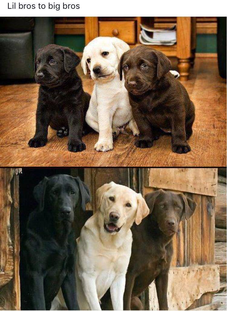 Tiere Von Michael Effing Auf Labrador Hunderassen