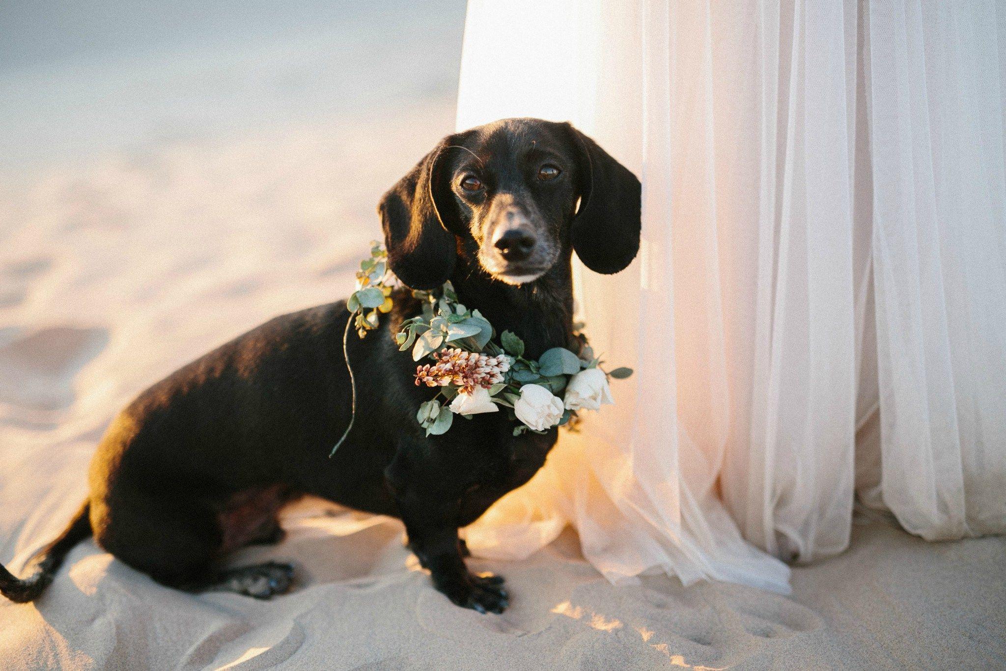 Elegant Utah Wedding Photos With The Cutest Dachshund Dachshund