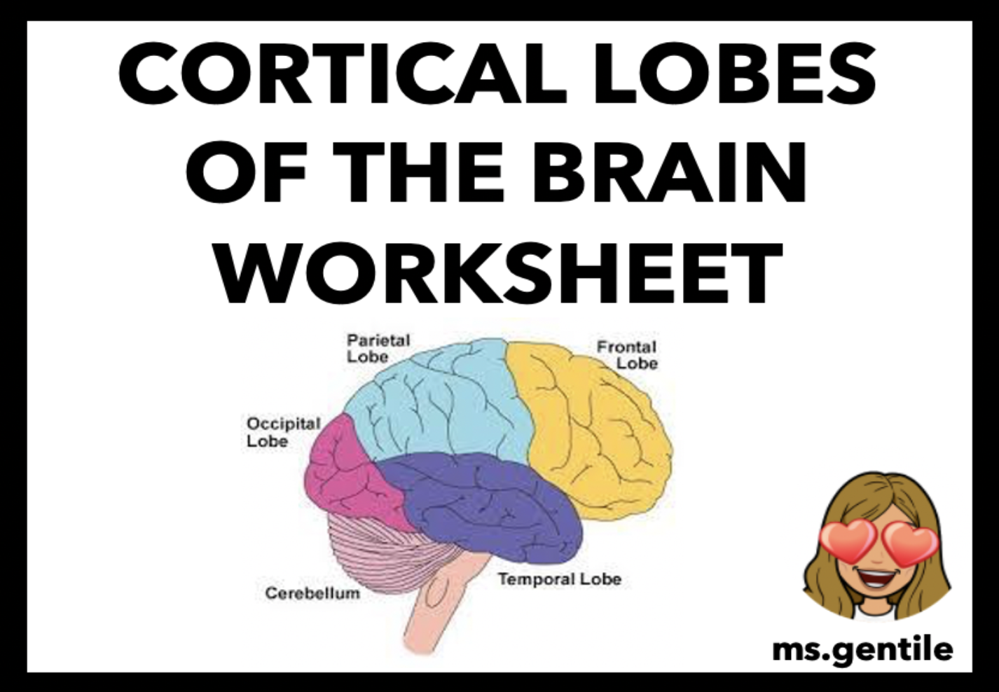 Cortical Lobes Of The Brain Worksheet In
