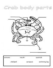 english worksheet parts of a crab proyectos que intentar pinterest english crabs and. Black Bedroom Furniture Sets. Home Design Ideas