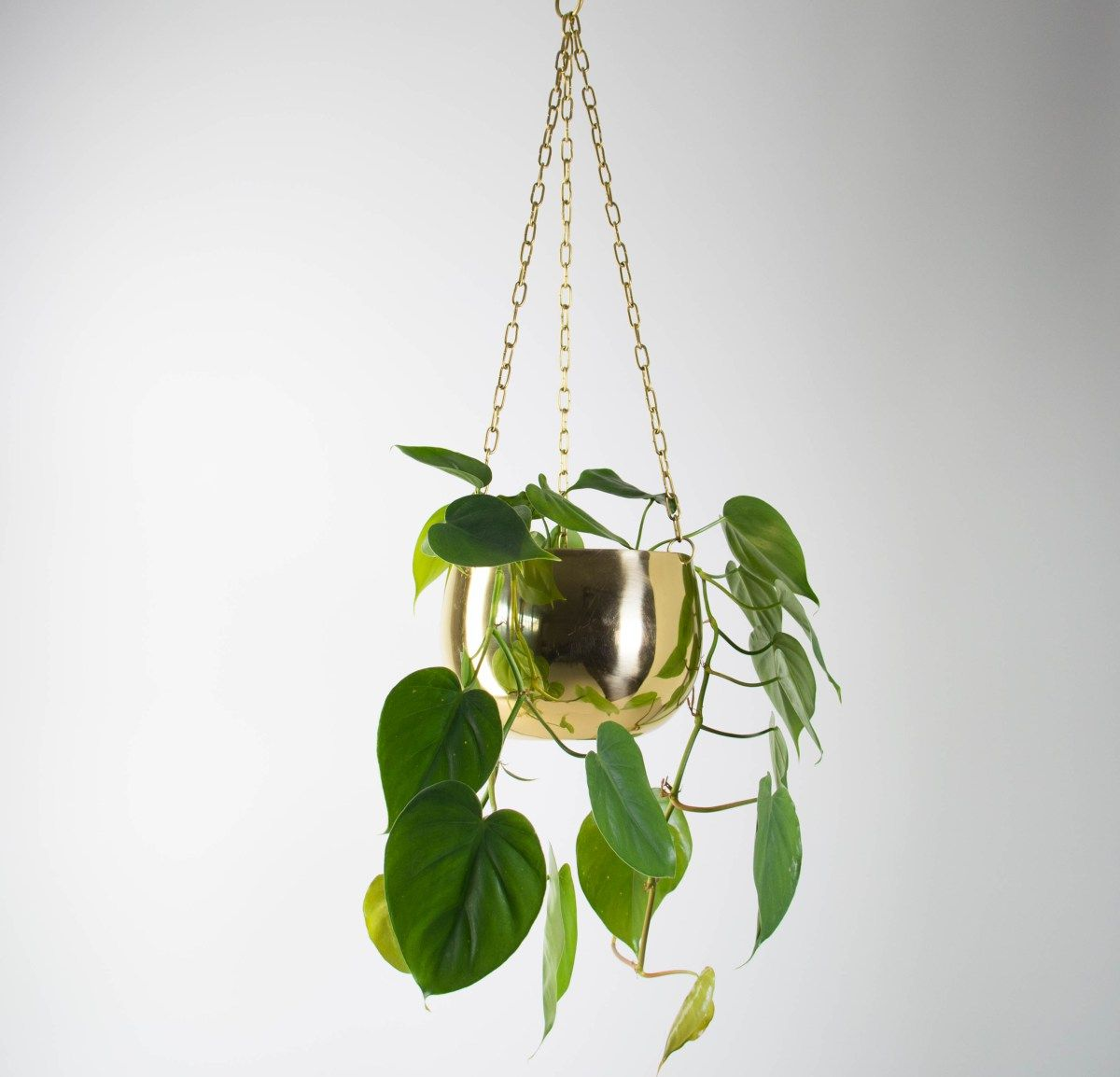 Sweetheart Plant In Real Brass Small With Images 400 x 300