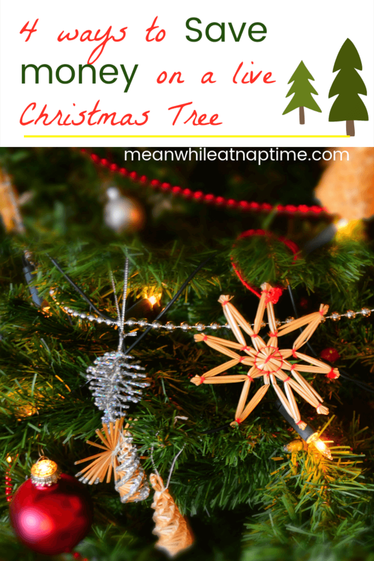 live christmas trees are very expensive try these ideas to get your live christmas tree - Free Christmas Trees For Low Income Families