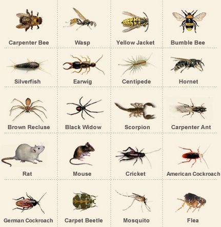 Pin By Poly Lopez On Halloween Ideas Insect Identification Bug Identification House Bugs
