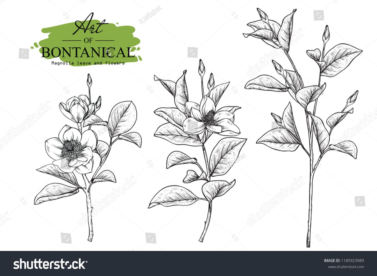 Sketch Floral Botany Set Magnolia Flower And Leaf Drawings Black And White With Line Art On White Backgrounds Hand Flower Drawing Floral Botany Leaf Drawing