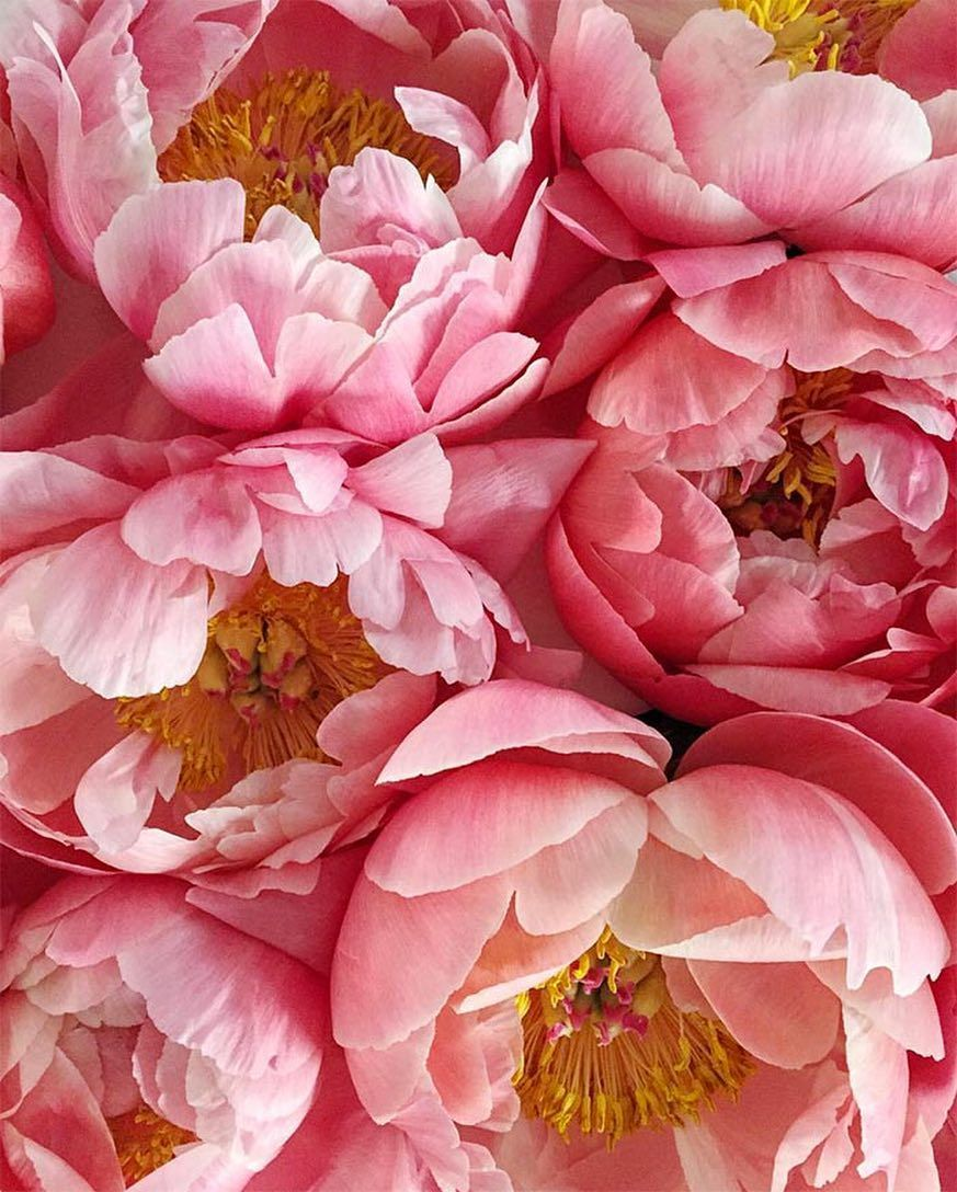 Pin By Agyeman Boateng On Flora Pinterest Flowers Peonies And Pink