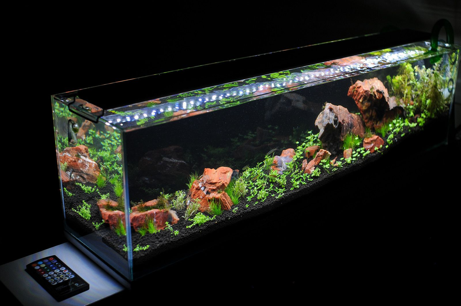 Nano led aquarium fish tank lighting - Satellite Club Showcase Your Current Sat Tank Links To Journals More