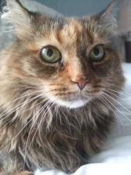 Adopt Zeppelin On Pretty Cats Crazy Cats Cats And Kittens
