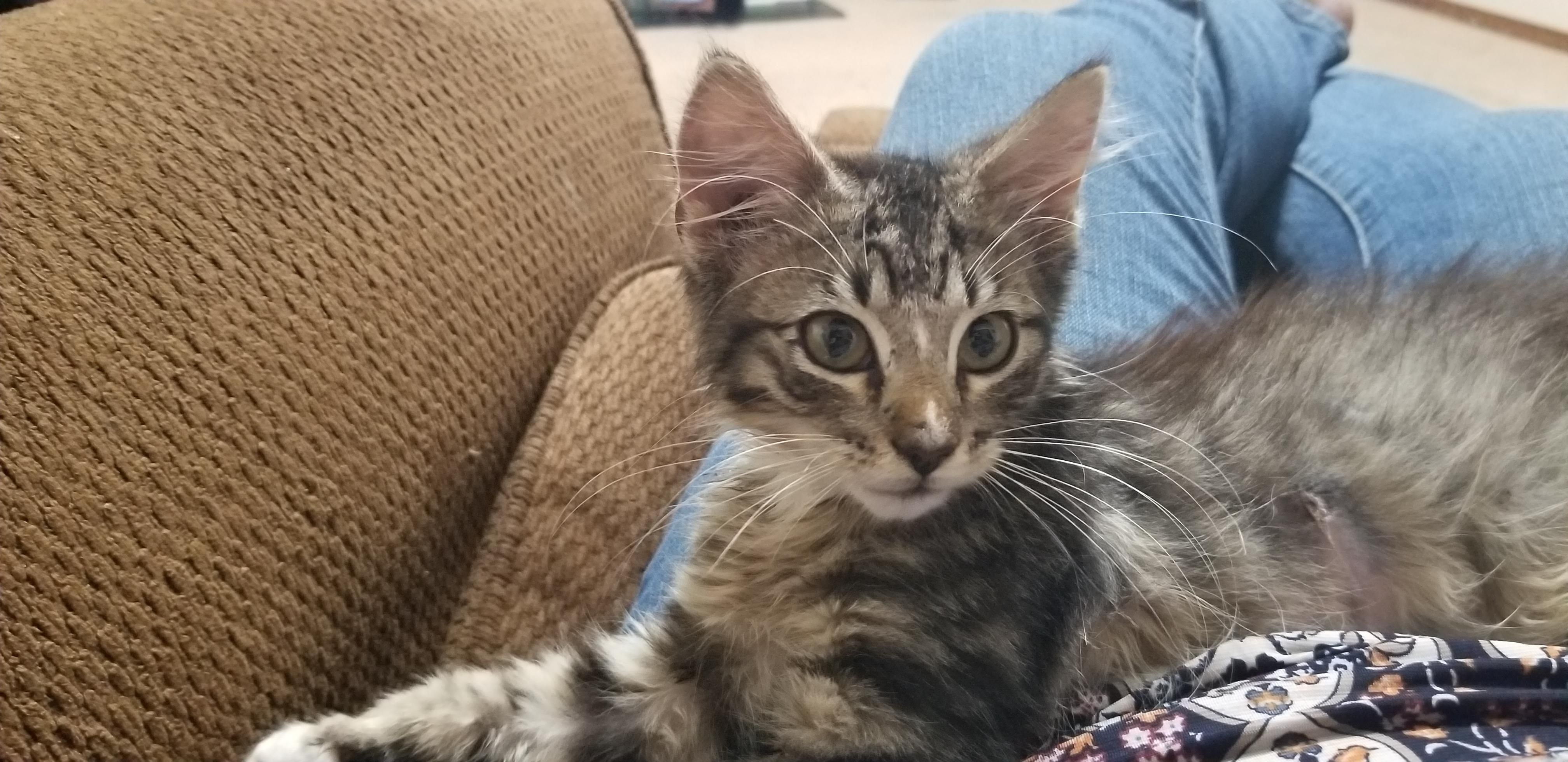 After Two Weeks Of Earning This Feral Kitten S Trust My Patience Finally Paid Off Reddit Meet Asherhttps I Redd It Fxef7z Feral Kittens Cute Animals Kittens