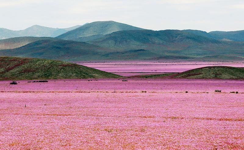 deserto del Cile