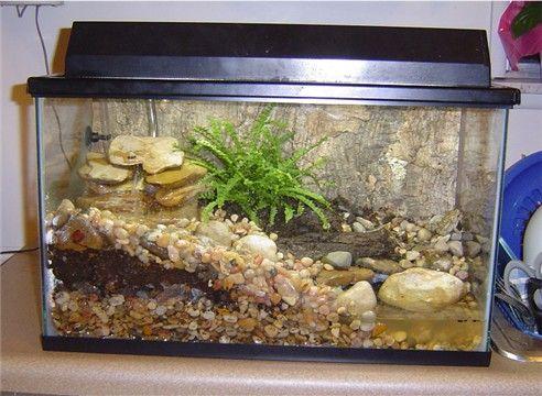 terrarium | Description: 10 gallon with 2 young fowlers ... 10 Gallon Vivarium