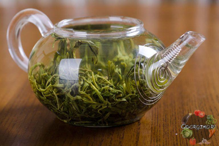 зеленый чай и алкоголь совместимость