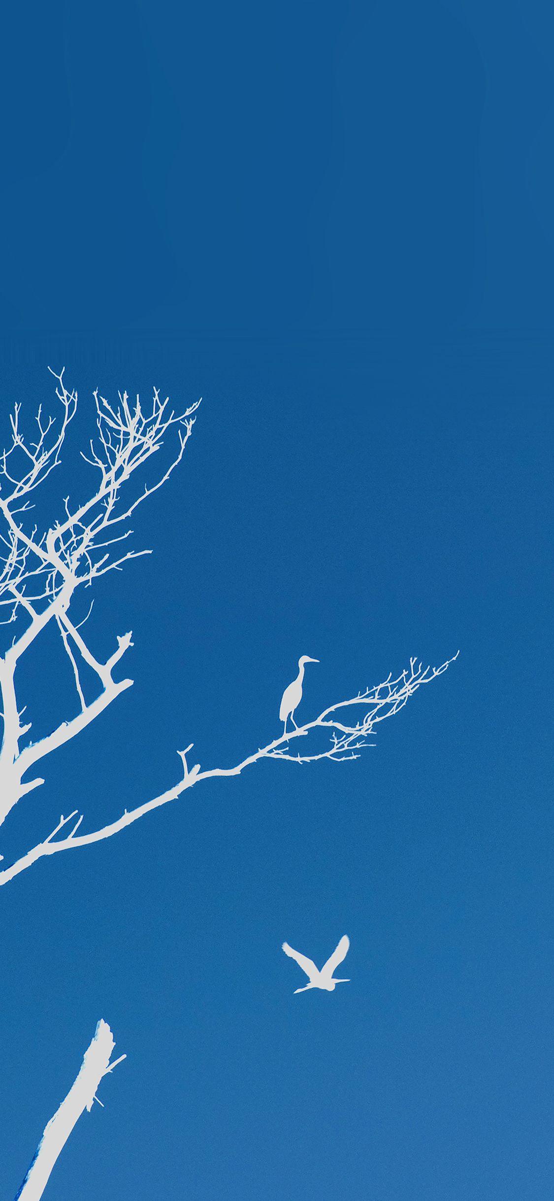 mk97 bird sunset tree blue nature minimal via iPhoneXpapers